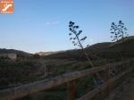 Pitas en Vía Verde Lucainena de las Torres