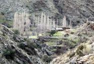 Cortijo en la sierra - Bacares