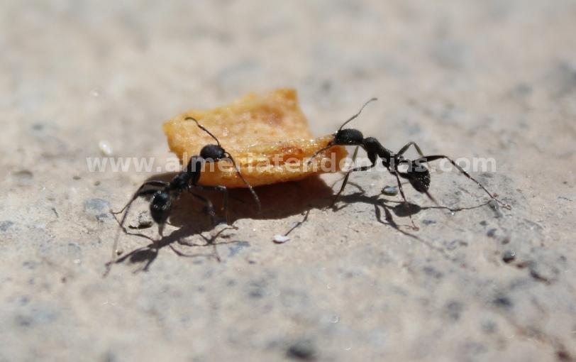 Somos Como Hormigas - No nos asusta el tamaño del reto