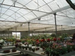 Flores primavera Garden Center Andarax