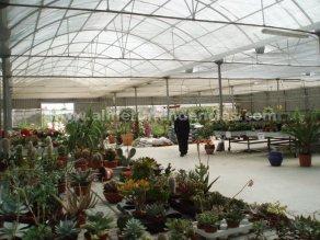 Flores primavera interior garden center andarax