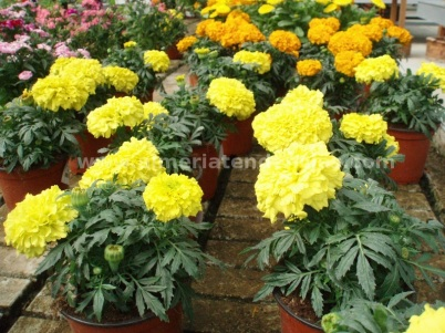 Flores primavera plantas