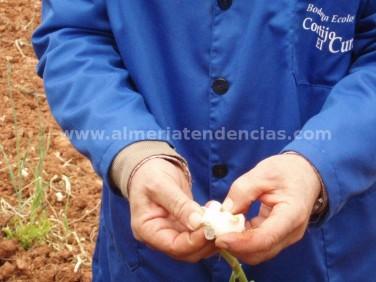 Justo Sánchez con ajos en Bodega Cortijo El Cura