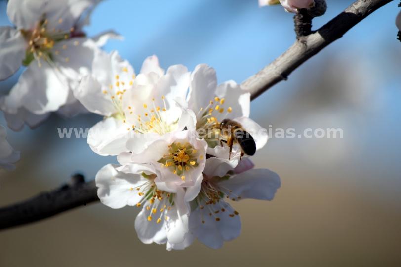 Flores en Lucainena de las Torres